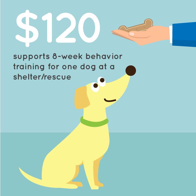 pedigree-dog-training-treat